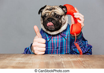 Funny pug dog with man hands talking on telephone