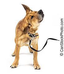 Funny Puppy Dog on Leash Shaking Body