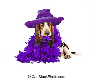 Funny Puppy in Purple Feather Boa - A cute young Basset...