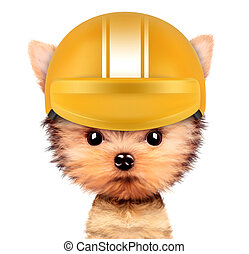 Funny racer dog with helmet