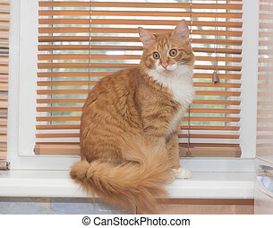 funny red cat sitting on a window sill