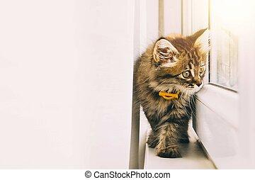 Funny resting cat