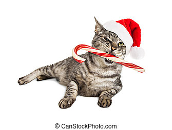 Funny Santa Cat With Candy Cane