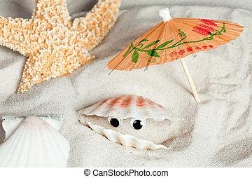Funny seashell