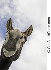 Funny Silly Jackass or Donkey - Humorous image of a jack ass...