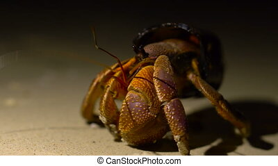 Funny Situation. Big Adult Hermit Crab Obtained New Home in...