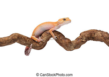 Funny small gecko stuck on a branch