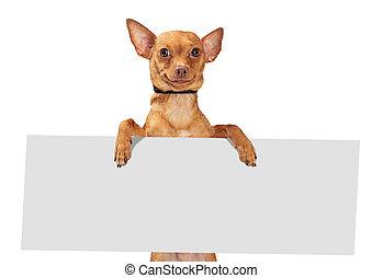 Funny Smiling Dog Holding Blank Sign