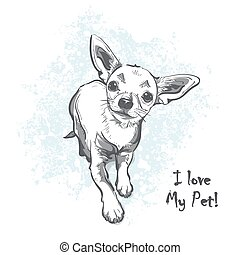 Funny smooth-haired chihuahua - Funny puppy chihuahua....