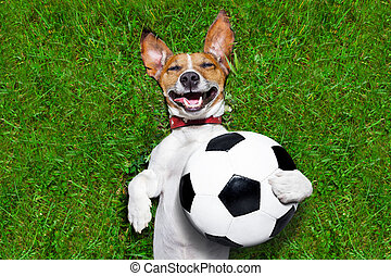 soccer dog holding a ball and laughing out loud