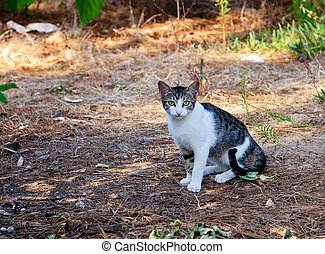 Funny striped gray adult cat with long mustache sitting on the grass in the Park. Homeless and stray cat on the street