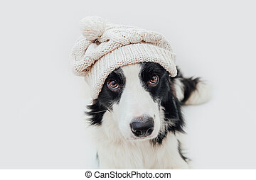 Funny studio portrait of cute smiling puppy dog border collie wearing warm knitted clothes white hat isolated on white background. Winter or autumn portrait of new lovely member of family little dog.