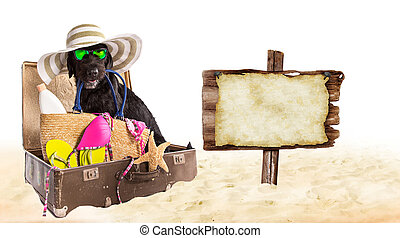 Funny summer black dog with summer accessories.