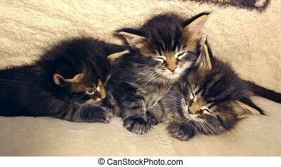 funny sweet kittens sleeping together