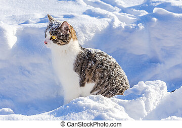 Funny tabby cat looking out from the snow