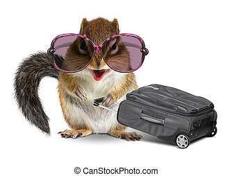 Funny tourist, animal chipmunk with baggage on white