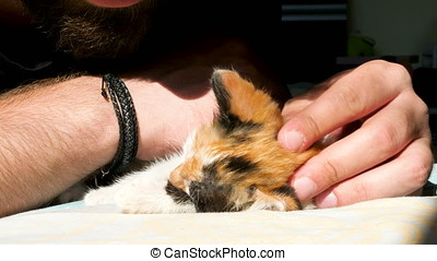 Funny video. Little kitten is grabbing and biting a bearded...