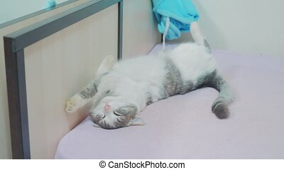 funny video the cat is sleeping . The cat sleep sleeping on...