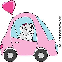 Funny white bear drives a car