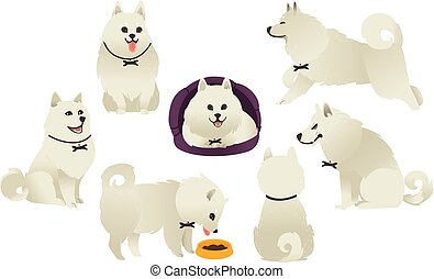 Funny white fluffy dog playing, sitting, eating
