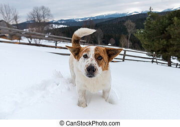 Funny young dog in winter mountain