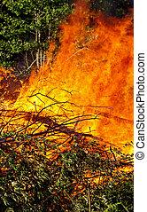 fuoco, abbattuto, albero
