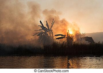 fuoco, campi, fumo, tropicale