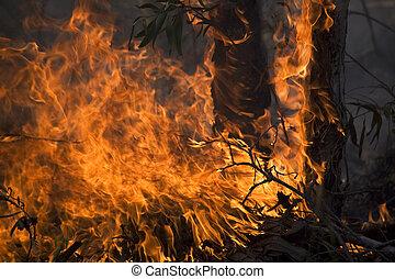 fuoco, disastro