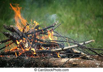 fuoco, estate, falò, foresta, falò