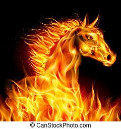 fuoco, horse.