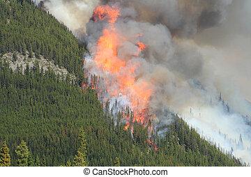 fuoco, montagne, 09, roccioso, foresta