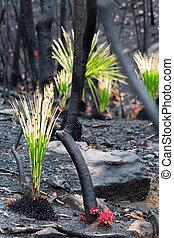 fuoco, rigenerazione, cespuglio, albero, ignifugo, secondo, ...