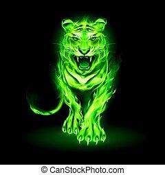 fuoco, tiger