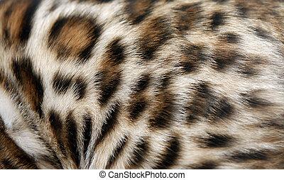 Fur Bengal cat