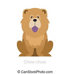 fur., pelucheux, breed., animal, chow-chow, chien