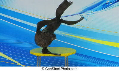 Fur seal performing on the stage, closeup, Canon XH A1,...