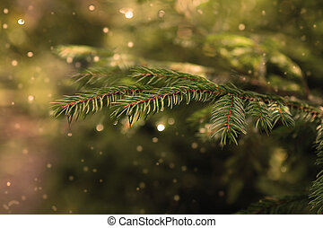 Fur-tree branch  for christmas background