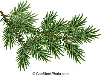 Green fluffy pine branch - Fur-tree branch. Green fluffy...