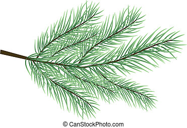 fur-tree branch vector