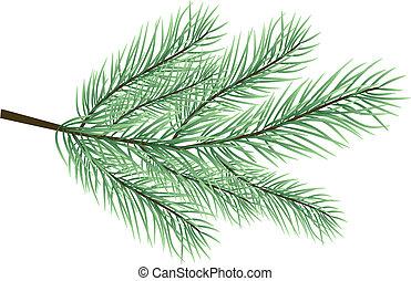 fur-tree, vettore, ramo