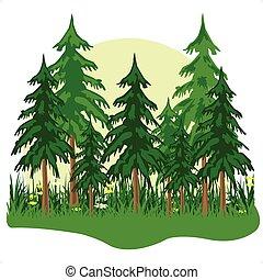 Fur wood - Wild coniferous wood in a morning fog.