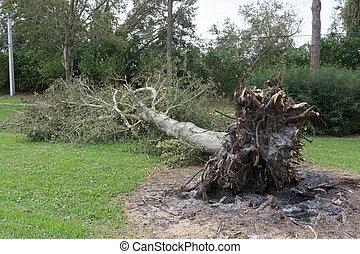 furacão, árvore, caído, durante