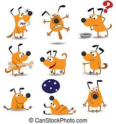 furcsa, állhatatos, kutyák