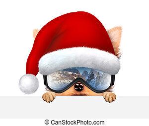 furcsa, kutya, fárasztó, síel, goggles., karácsony, fogalom