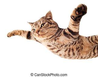 furcsa, repülés, cica