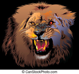 furious lion - ferocious lion in the jungle on the black...