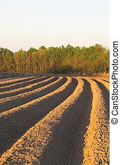Furrows - The furrows of a freshly plowed field.