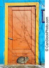 Furry cat near bright painted door in winter