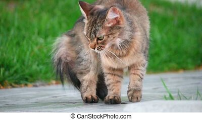Furry cat outdoors - Furry cat cleaning outdoors