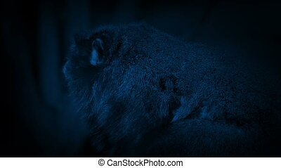 Furry Little Monkey In The Jungle At Night - Small monkey on...